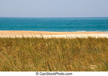 Beach with sand and grass, Nazare, Portugal