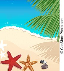 Beach with starfishes