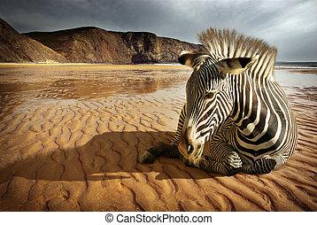 Surreal scene of a sitting zebra in an empty beach