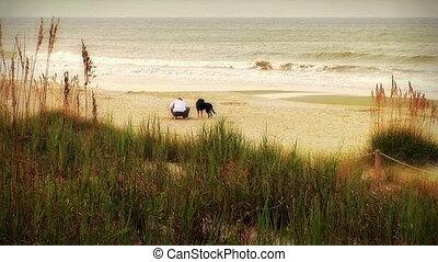 beachcomber, (1004), plage, chiens