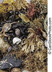Beachcombing. Assortment of marine life and debris collected...