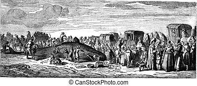 Beached whale. - Drawing Bocourt, after a print of the collection Mouilleron, vintage engraving.