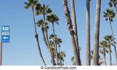 beachfront, ferie, dłoń plaża, słoneczny, usa., turysta, ...