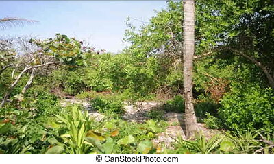 beachfront land empty Nicaragua - undeveloped beach...