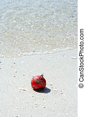 beachy, noël