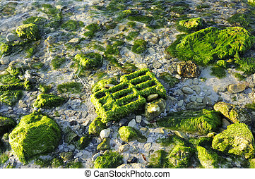 Beack rocks background - Texture of beach rock with green...