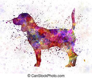 beagle, aquarelle