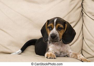 beagle, basierend
