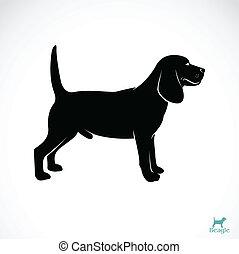 beagle, bild, vektor, hund