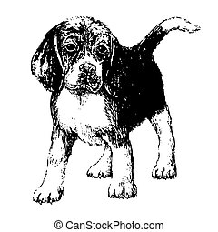 Black and white beagle , hand draw vector.