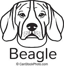 beagle, cão