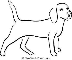 beagle, chien