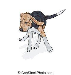 beagle, dessin, ombre, courant, blanc