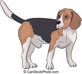 beagle, dog., vector.
