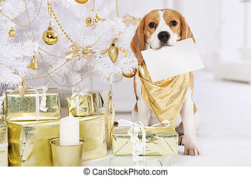 Beagle dog with a greeting card