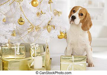 beagle, hund, mit, a, geschenk, pakete