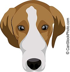 Beagle - illustration