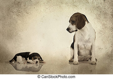 Beagle mom - A beagle mom after is pregnancy looking to her...