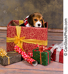 Beagle puppy christmas gift