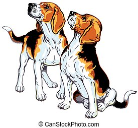 beagles - two beagle hounds, hunting dogs breed, picture...