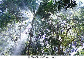 Beam of light through the trees