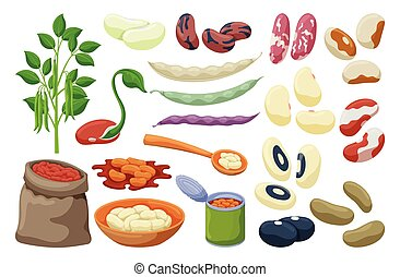 Bean of food vector illustration on white background ....