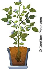 Bean plant flowers icon, cartoon style
