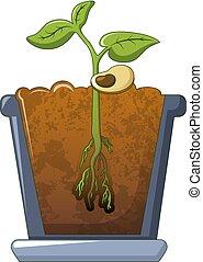 Bean plant growing icon, cartoon style