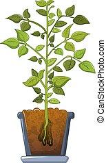 Bean plant icon, cartoon style