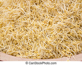 bean sprouts large - large yellow bean sprouts at local...