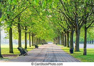 beanch., récréatif, parc, haut, arbres, vert, sentier, revêtu