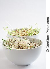 Beansprout Bowls - Portrait Orientation - Two white china...