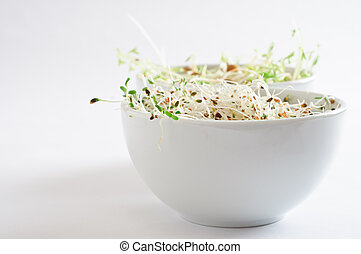 Beansprout Bowls - Two bowls of beansprouts. Alfalfa in...