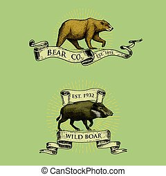 bear and boar logos, emblems or badges with wild animals and banners or ribbons in vintage, retro old style, hand drawn engraving. sketch