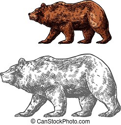 Bear animal sketch of walking brown grizzly