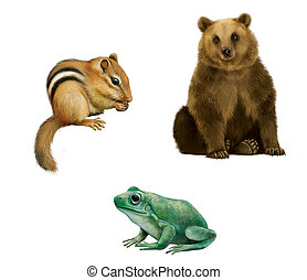 Bear, Chipmunk, and frog. Isolated realistic illustration on white background