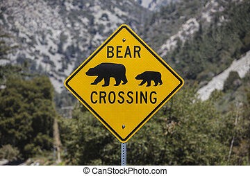 Bear Crossing Highway Sign with National Forest Background