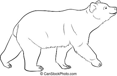 Bear Drawing Vector Illustration