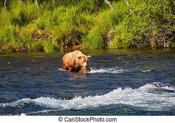Bear on Alaska