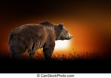 Bear on the background of sunset