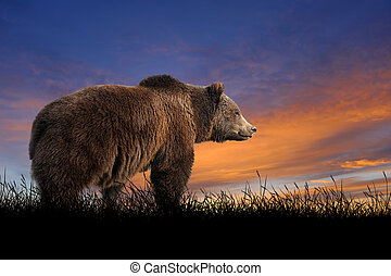 Bear on the background of sunset sky