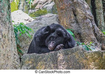 Bear on the rocks.