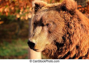 Bear portrait in the woods