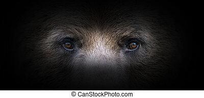 Bear portrait on a black background