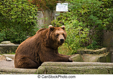 Bear relaxing on the rocks
