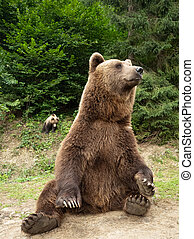 bear sits in the forest on the ground