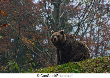 bear sits on a hill in the grass
