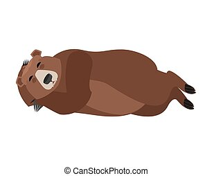 Bear sleeping isolated. Grizzly asleep emotions. Wild beast dormant. Vector illustration