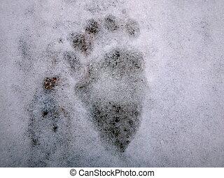 Bear tracks in the snow