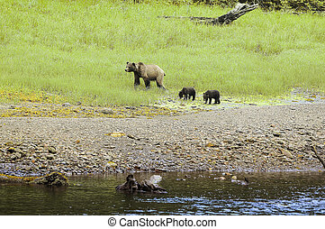 Bear with cubs.